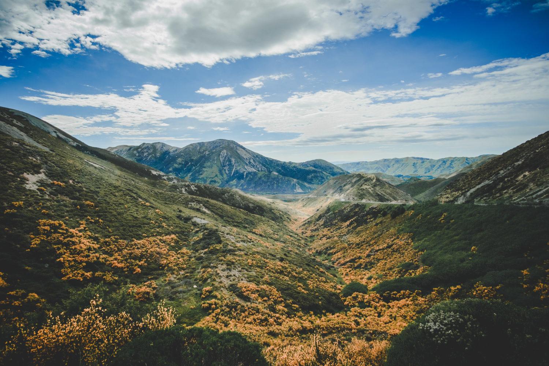 Graslandschaft auf dem Weg Richtung Tekapo