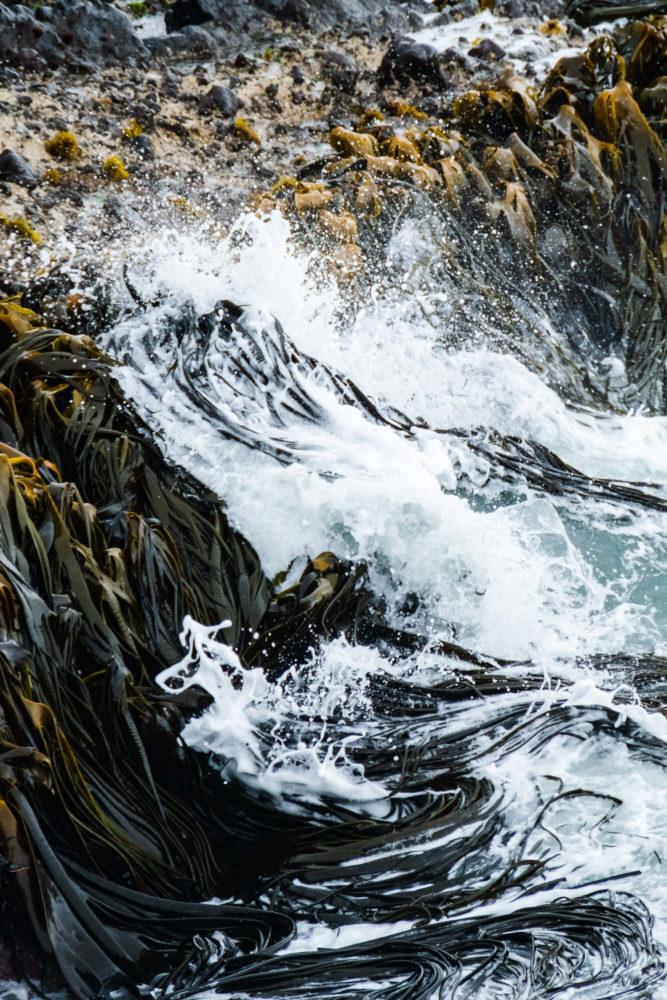 Wellen im Wasser treffen auf riesige Algen
