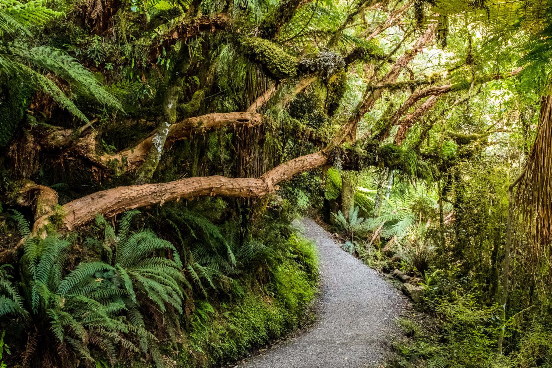Wanderweg durch den Dschungel zu den Mc Lean Falls