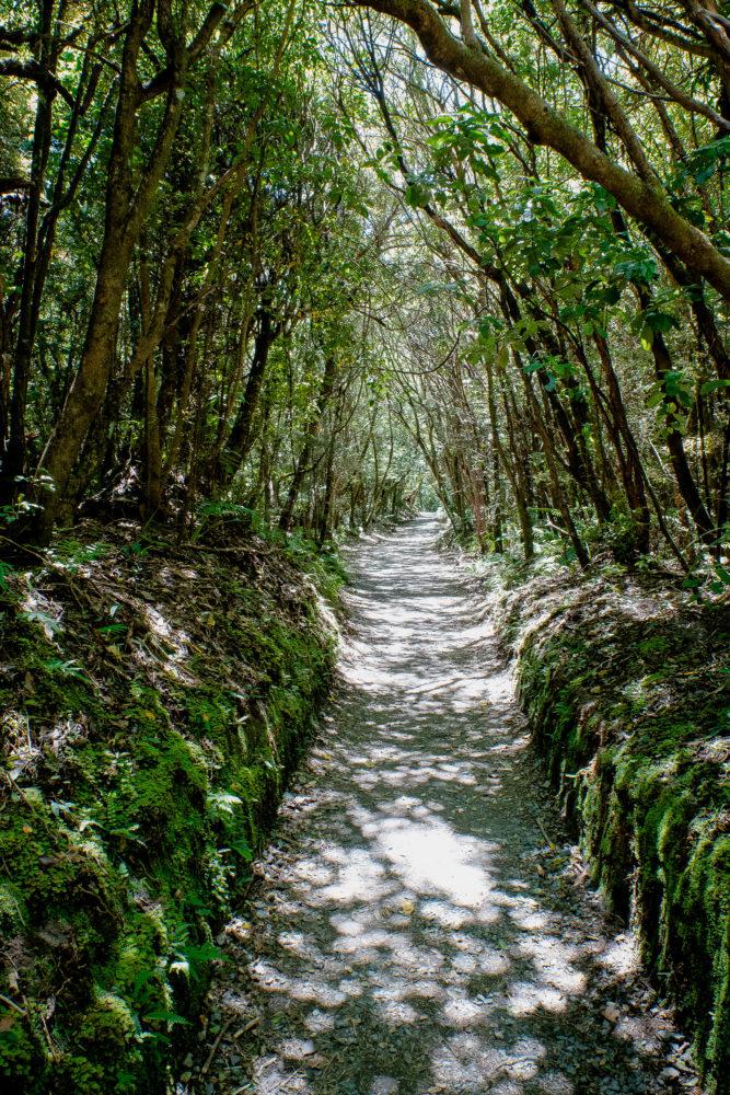 Wanderweg durch eine Allee von schmalen Bäumen