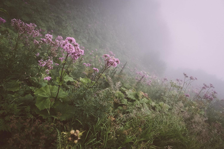 Bergwiese mit lilanen Blumen im Nebel