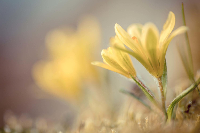 Makro Aufnahme einer gelben Pflanze