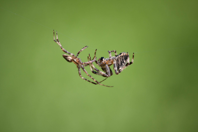 Schwebende Spinnen