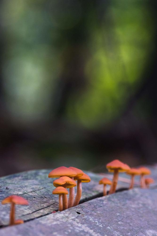 Orangene Pilze wachsen aus einem Baumstamm