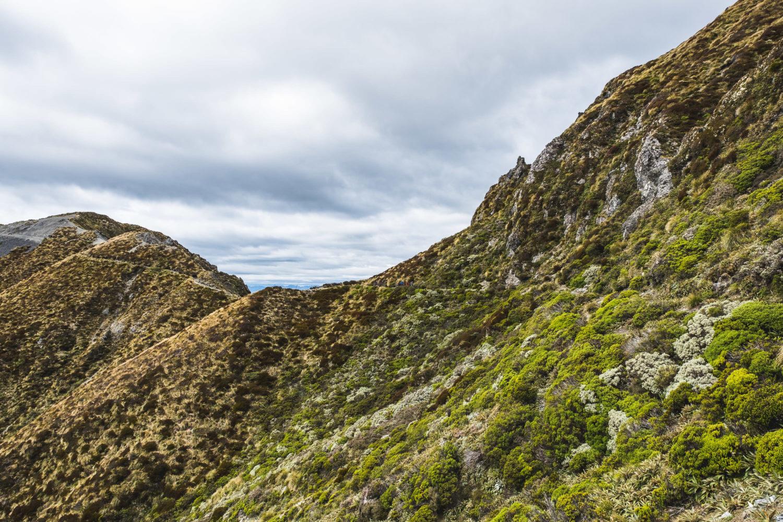 Wanderer auf einem Pfad durch Tussock Graslandschaft