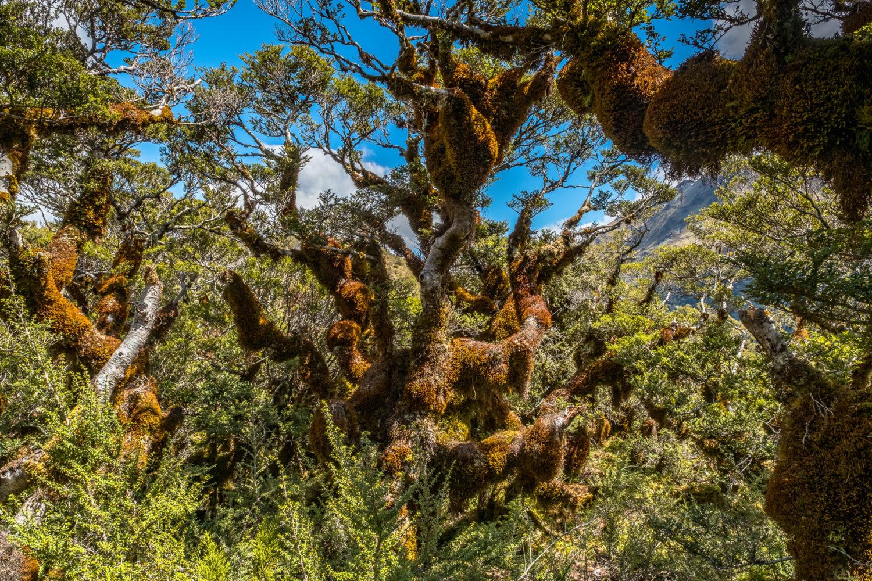 Moosbewachsene Bäume