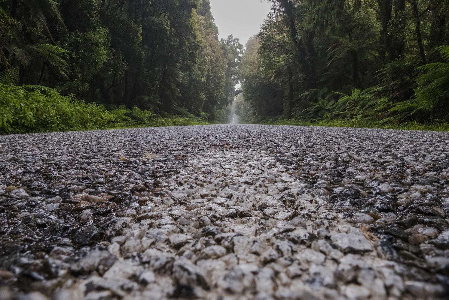 Straße nach Jackson Bay mit Bäumen an der Seite