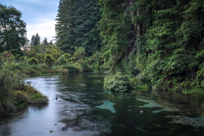 Flusslauf mit Wald in den Hamurana Springs