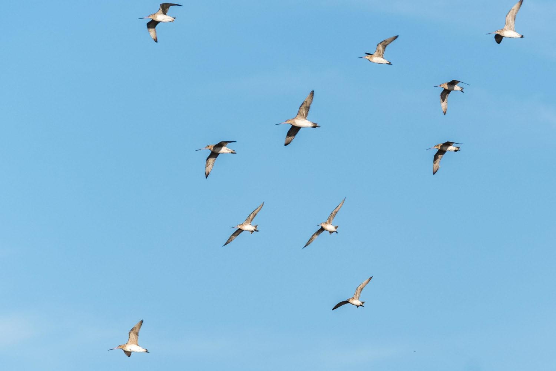 Gruppe von Vögel fliegen vor blauem Himmel