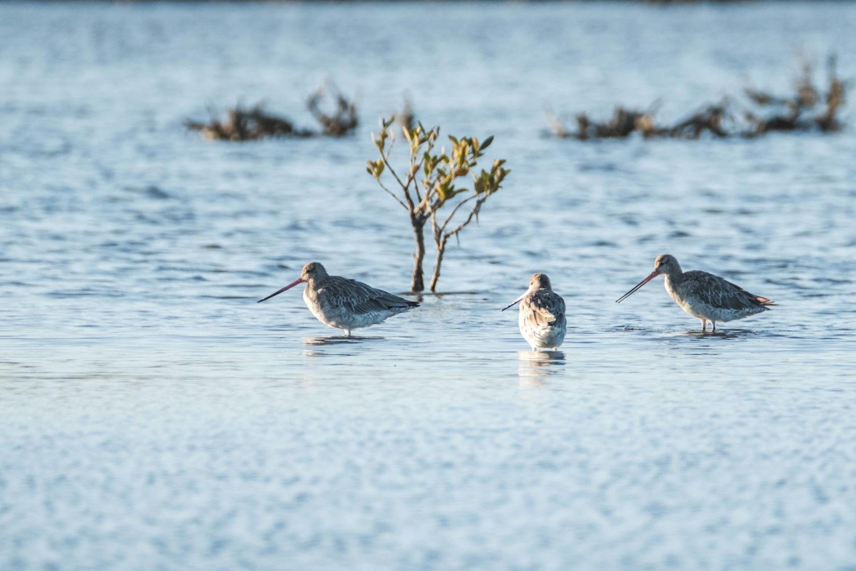 3 Vögel mit langen Schnäbeln sitzen im Wasser