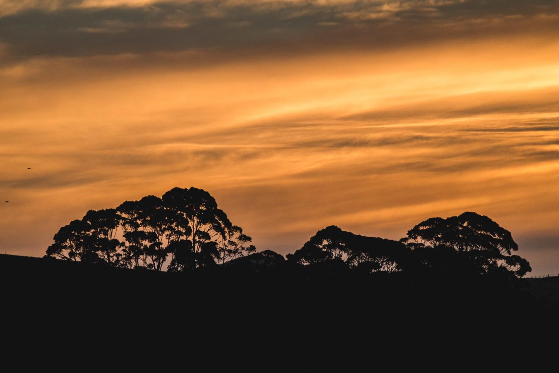 Scherenschnitt einer Baumgruppe beim Sonnenuntergang