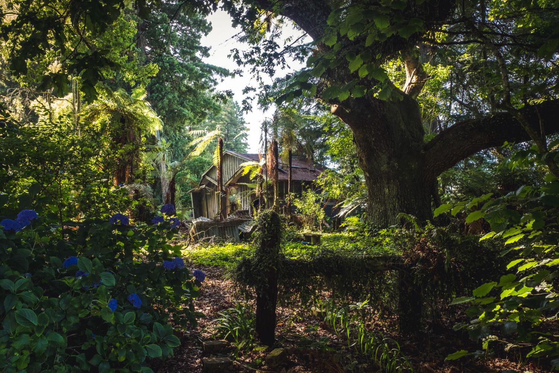 Wellblechhütte inmitten von Bäumen und Hecken