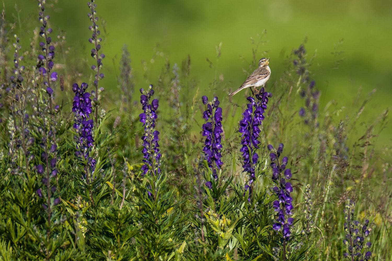 Vogel sitzt auf einer Blume und hat ein Insekt im Schnabel