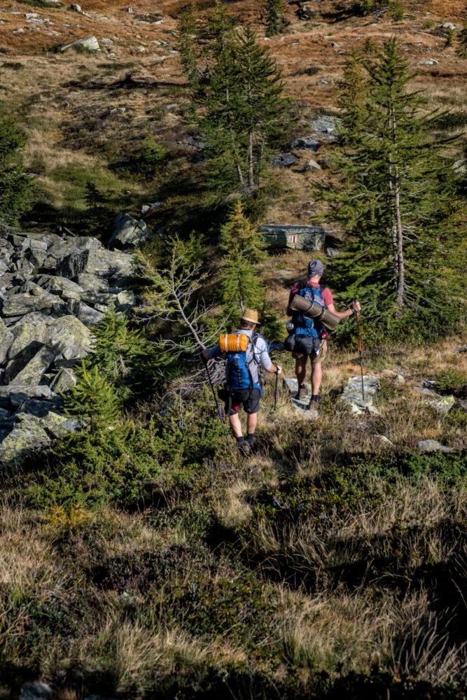 Zwei Wanderer laufen durch fjällähnliches Gelände mit kleinen Bäumen