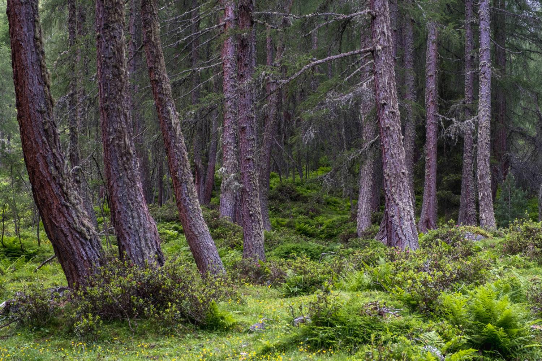 Bäume zwischen Sträuchern im Wald